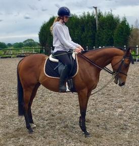 Stunning Performance Horse