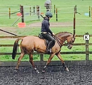 14.2hh Striking Allrounder