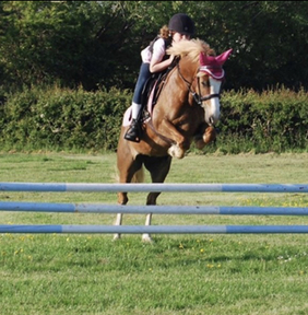 Fantastic pony club mare