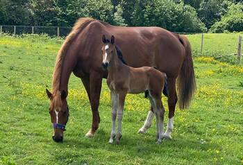 Stunning mare  by wolkenberry with devivio colt foal