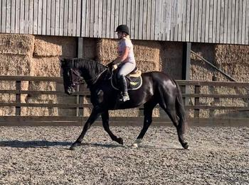 Stunning AES Mare, Super Potential