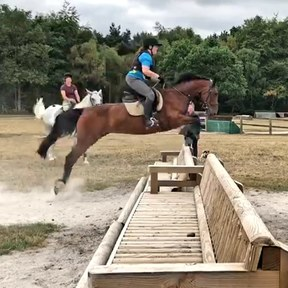 14.2hh 13year old Welsh x type