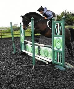 Smart 14'2 pony club all-rounder