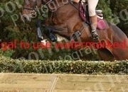 Lovely 16.1hh 4yr Old Event gelding