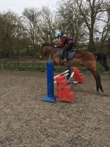 Horse wanted for loan/share Cheltenham