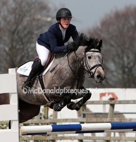 Prosecco SJI Irish Sport Horse 15.2 ☘️