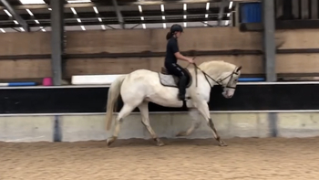 Lovely Appaloosa gelding looking for a loving home to further his education.