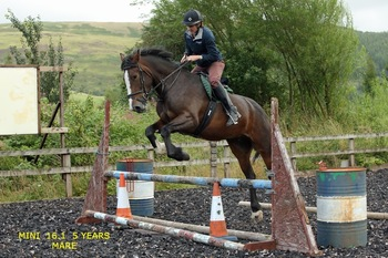 Sweet young hunter / eventer/all rounder