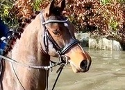 Jack – handsome, super quiet and quality allrounder!