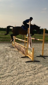 Super horse for rider coming off ponies / nice allrounder