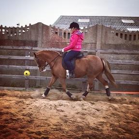 13.2hh Competition/Pony Club Pony