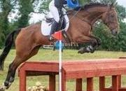 8yr Old Ideal Amateur Eventer