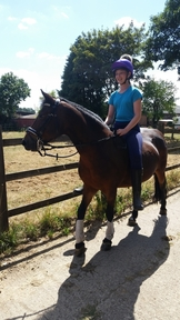 13.2 mare for sale