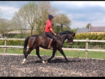 Lovely 15hh, bay mare