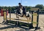 Emma - pretty coloured mare!
