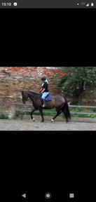 16.2 mare 16 years old but green as a 4 yo.