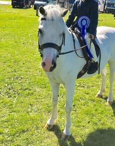Welsh section A lead rein lacy dancer 12hh