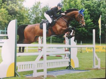 Quality Talented Horse for Someone on a Budget