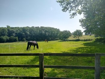 DIY livery grazing, stables, menage, great hacking Bygrave near Baldock North Herts