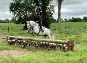 Stella - quality sports pony!