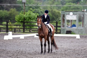 QUALIFIED FOR BOTH THE BRITISH DRESSAGE SUMMER REGIONALS AND THE AREA FESTIVAL