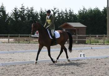 Beautifully bred 16.2 mare