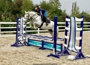 Mandy - 8 year old fabulous jumping mare!