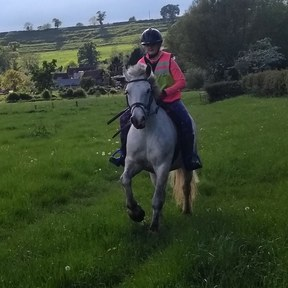 8yr old Fun Pony Club All Rounder £3000 with complete wardrobe