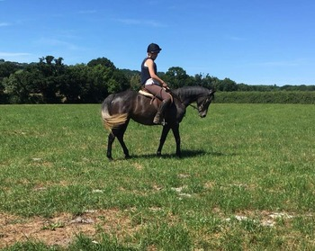 MAY  14HH 5 year old Connemara x TB mare