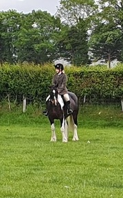 Beautiful coloured mare 9yrs old