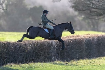 Fab hunting pony