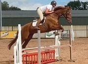 16.3hh 4yr old super competition horse.  Top prospect