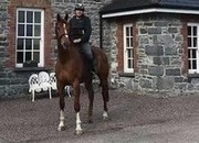 17.2hh 5yr Old by Newmarket Venture