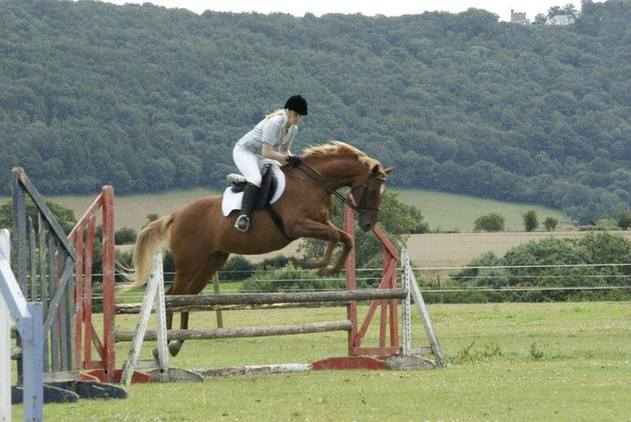 Bob 15.1hh TB gelding Loan horse