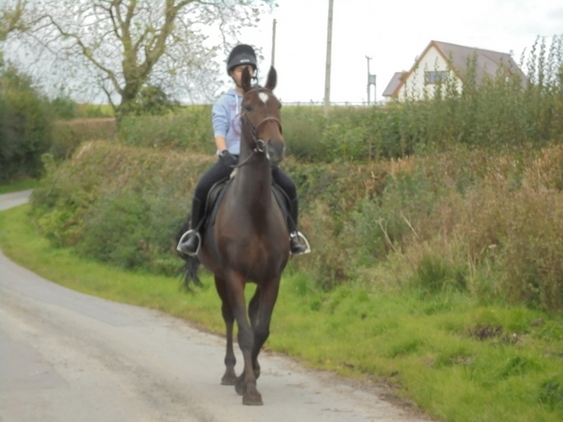 Lippizaner competition horse NOW HOMED but we have others...