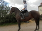 Lippizaner competition horse NOW HOMED but we have others... for sale in United Kingdom