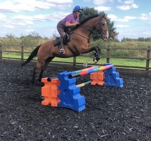 Fun 16.2hh Hunter suitable for RoR