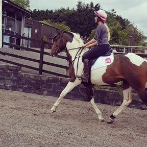 **reduced** 3 year old coloured warmblood gelding