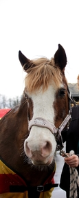 Straightforward, Sweet Natured, Safe But Fun Hacking Pony For Sale/Long Term Loan
