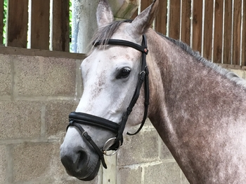 KB Snaffle Bridle, Cavesson