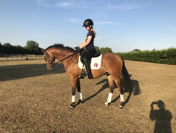 Stunning Young Dressage / Show pony