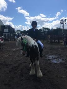 12.2 pony cob