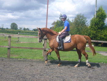 Proven Broodmares inc stunning mare by