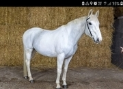 Sharer wanted for my very special gelding