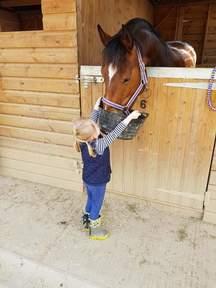 Beautiful Irish Sports Horse