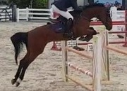 5yr Old 1.20m progressive Showjumper
