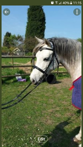 Confidence giving  Horse WANTED - 15-15.3hh