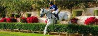 Parys Horses
