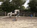 Irish Horses UK