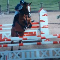 Morjoy Horses